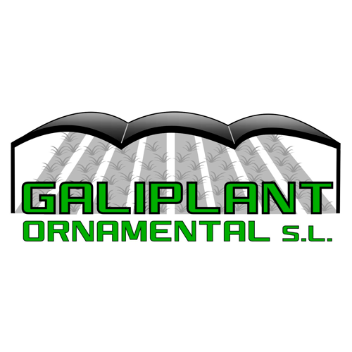 Galiplant Ornamental