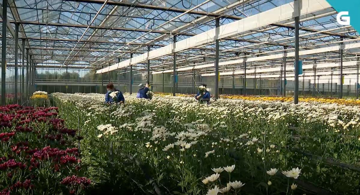 El sector agro echa mano del ingenio y el trabajo duro para superar la crisis sanitaria